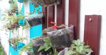 Jardim vertical construído por alunos